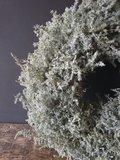 Asparagus wax krans (doorsnee ca 45cm)_